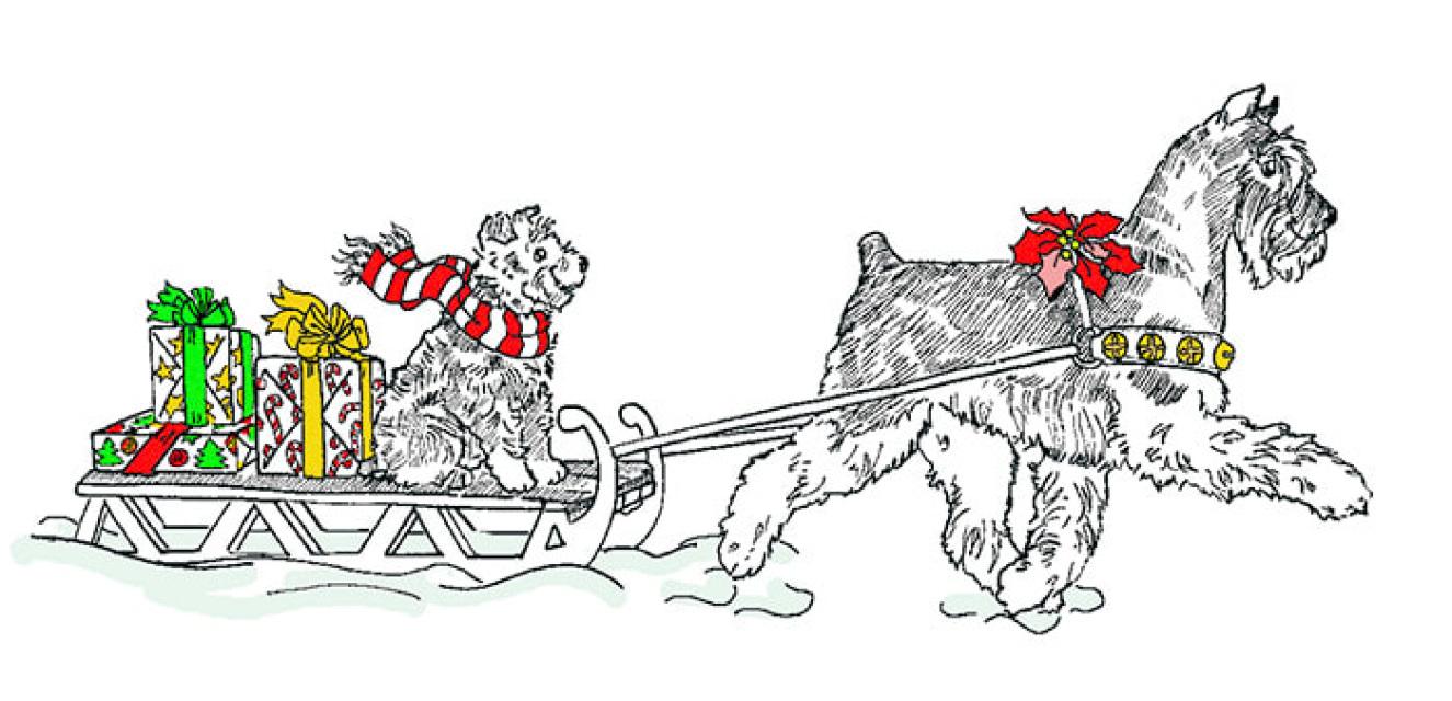 Miniature Schnauzer Christmas Card \